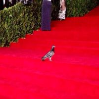 therealpigeon